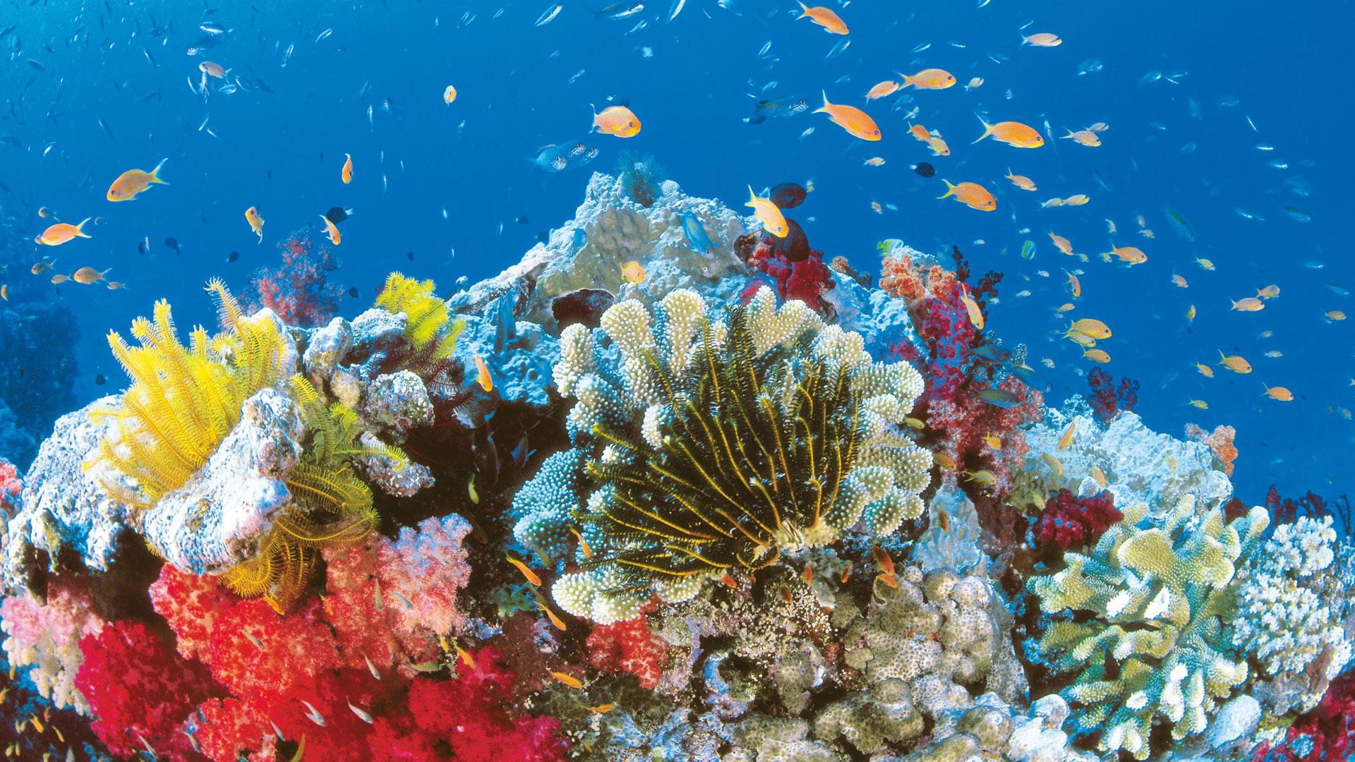 explore-states-qld-summer-marine-life